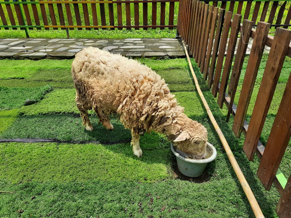 Ohrada pre ovce na kľúč Bratislava iploty